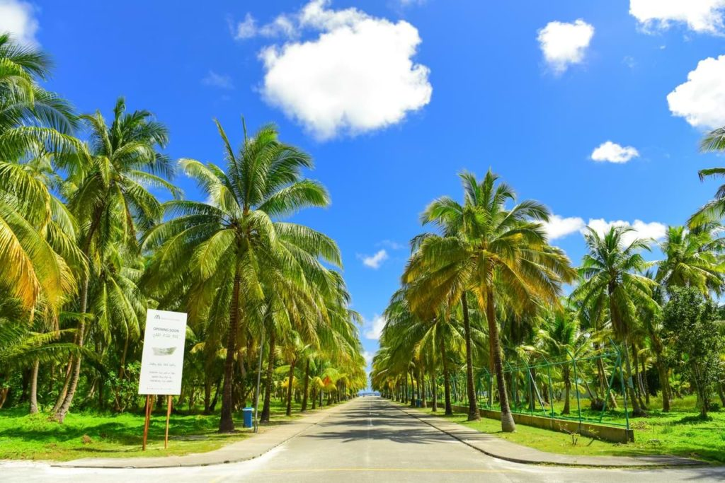 tropical road with paint markings